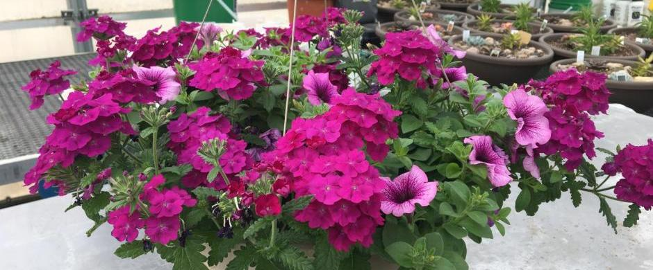 Norris Greenhouse to Sell Home-Grown Plants